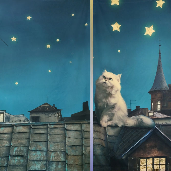 Фотошторы «Кот на крыше»