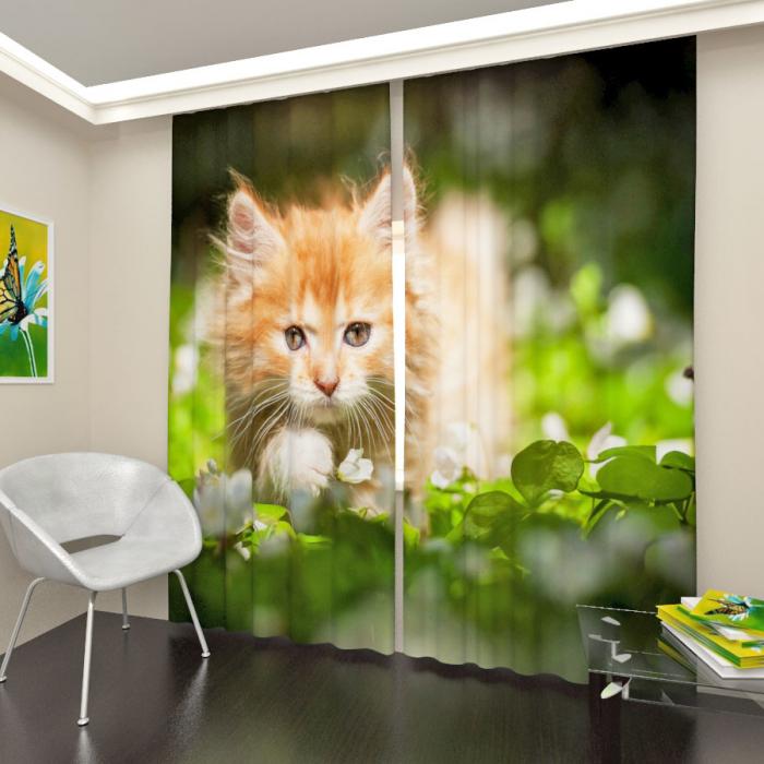 Фотошторы «Пушистый котенок»